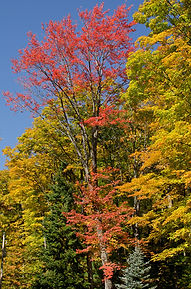 Beautiful autumn colors in Chequamegon-N