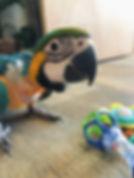 baby Kikos Toy chest.jpg