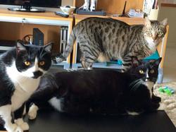 Cat Sitting: Rimpie, Bassai, Fanchi