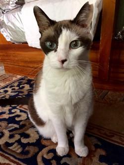 Cat Sitting: Psycho