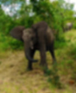 Support of our elephants is critical to their survival