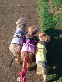 Pet Sitting: Buddy, Sassy, Camille