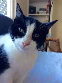 Cat sit: Claudia