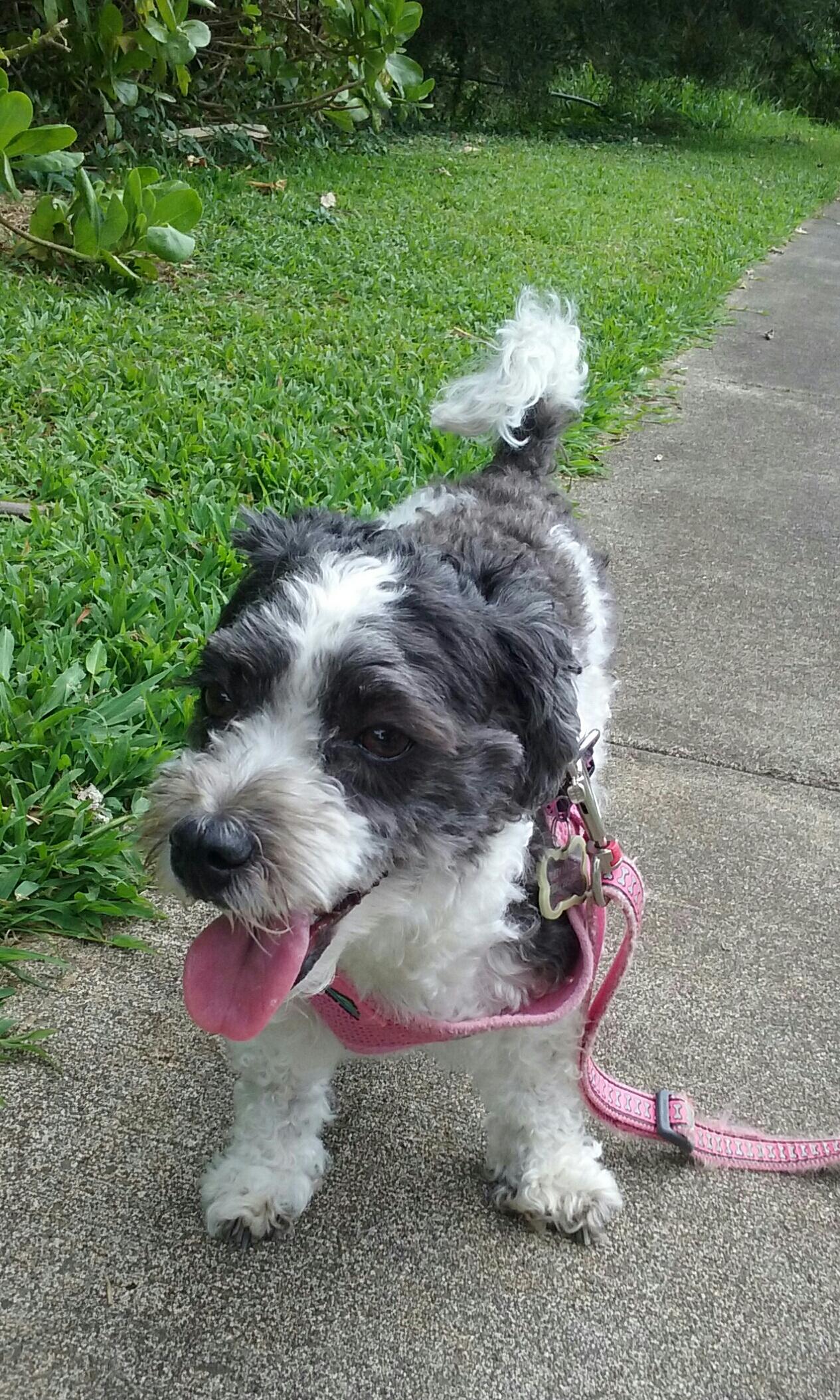 Dog Walk: Izzy