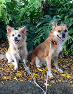 Dog Walking: Dino and Kiki