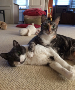 Cat Sitting: Figgy and Boo