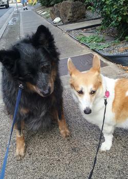 Pet Sitting: Honu and Nai'a