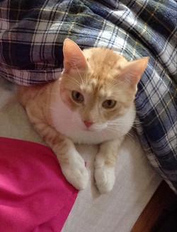 Cat Sitting: Varodya