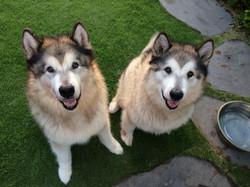 Pet sitting: Koko and Kaia