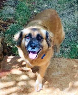 Dog Walking: Sadie
