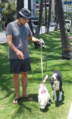 Dog Walking: Chuckie and Sadie