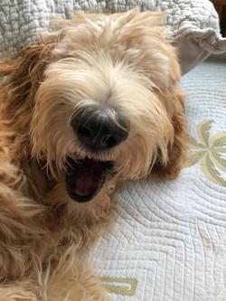 Dog Care: Cecil