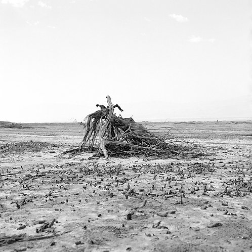 DEAD SEA-UNTITLED