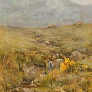 An Arran Hillside