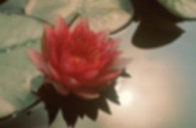 flower pic.jpeg