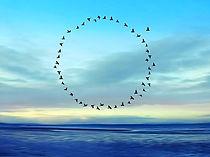 healing+birds.jpg