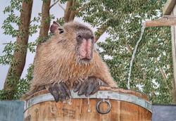 capibara-m