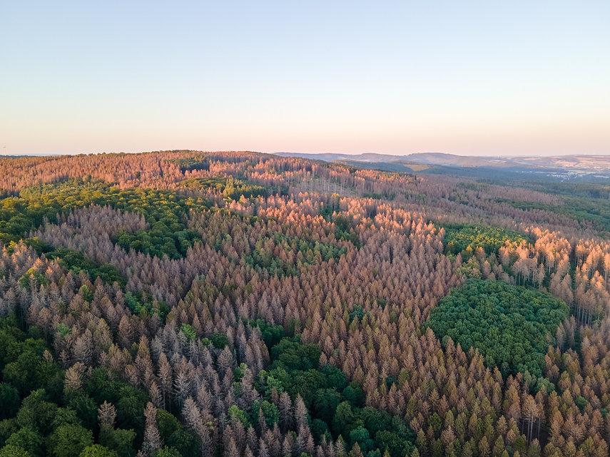 forest-5468689.jpg