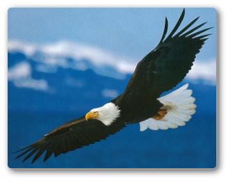 Eagle_Lg.jpg