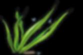 Cartoon Seaweed.png