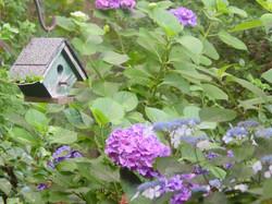 of birdhouse