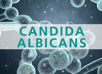 Chronic pain? Consider going on a Candida cleanse.