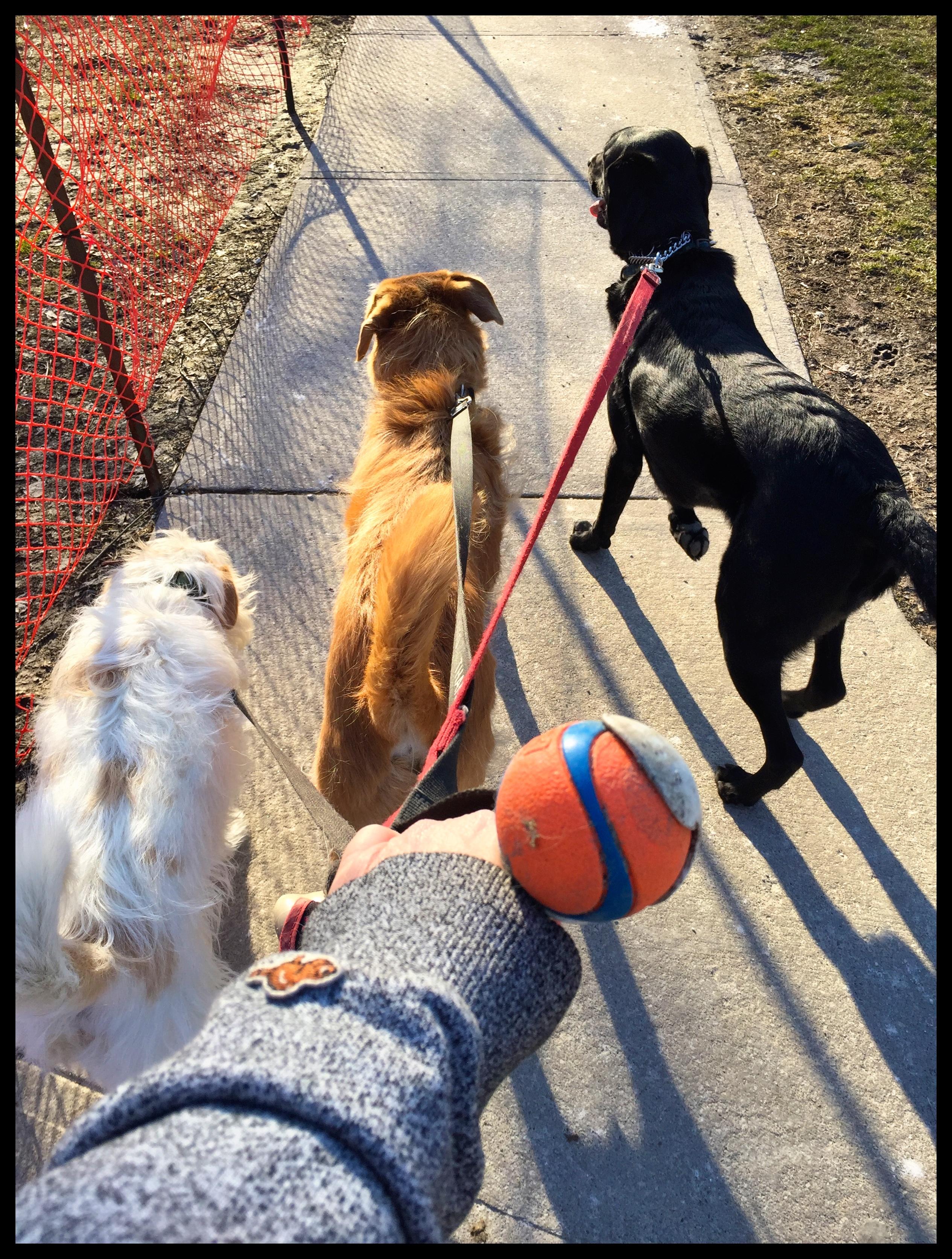 ball time!