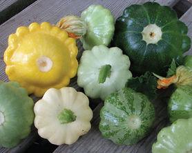 Scallop-Blend-Squash-Seeds.jpg