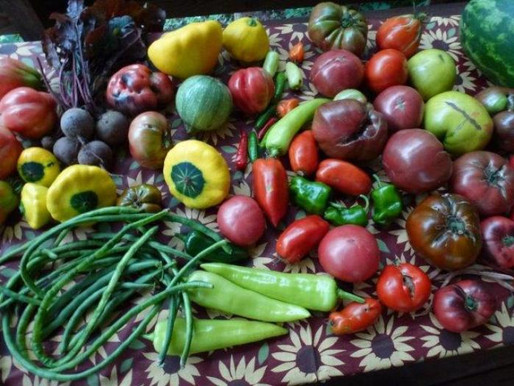 Five Tips for Growing a Garden that Fights Hunger