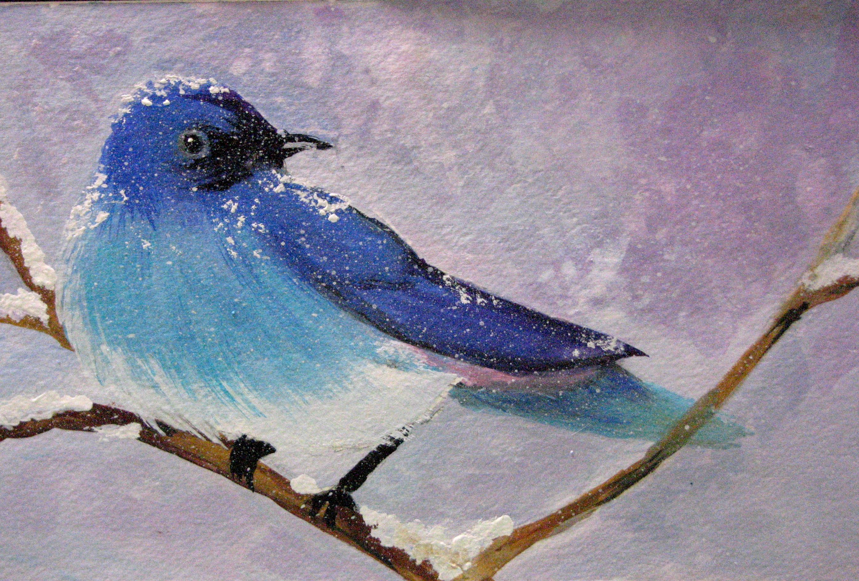 Rocky Mountain Blue Bird