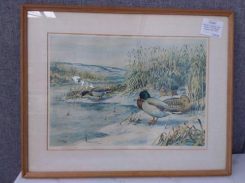 Medium Picture- Ducks In The Marsh