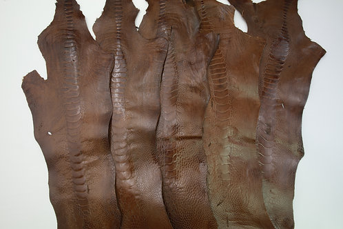 5 Ostrich Legs Skin Leather Brown Color Grade B