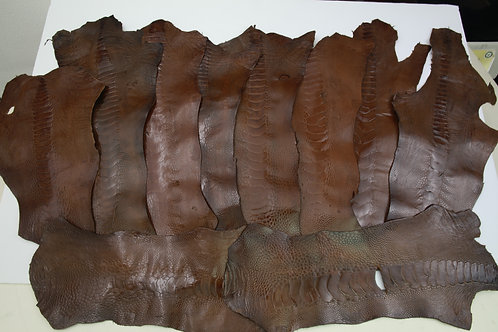10 Ostrich Legs Skin Leather Brown Color