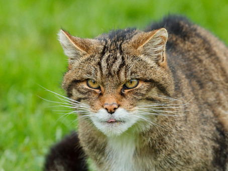 A list of endangered animals in the UK.  Some you may never of heard of!