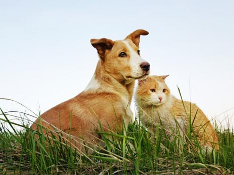 Pawsome Pets
