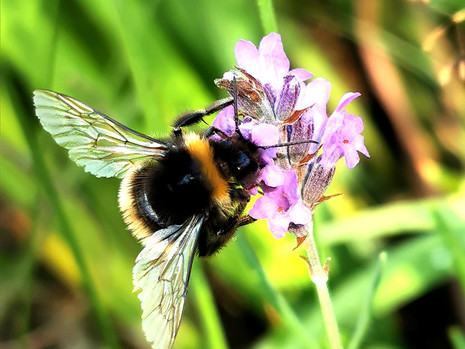 The Buzz about Bees and some simple things we can do to help them out.
