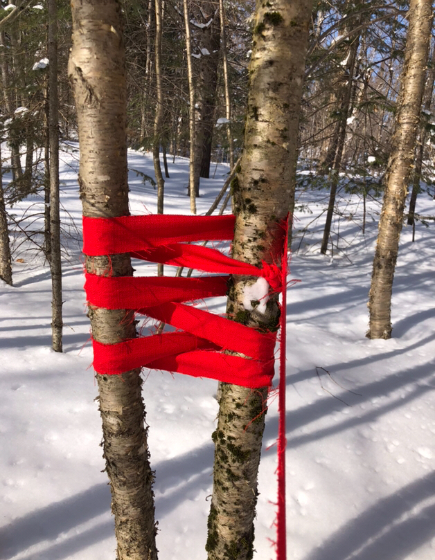 Remembering Our Sisters, Forest Installation, 2019