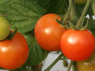 Tomatoes and Pretty Raspberries