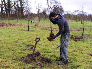 Tree Planting Continues...