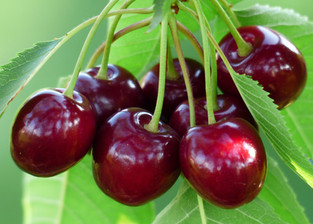 Cherries and Blackcurrants