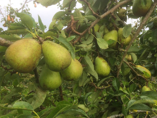 Beth Pears