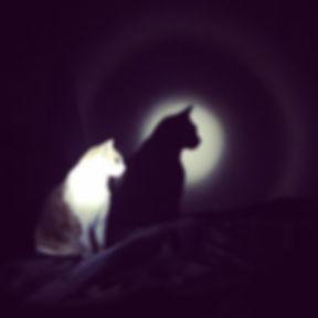 .the future is bright._#cowboy #cat #sha