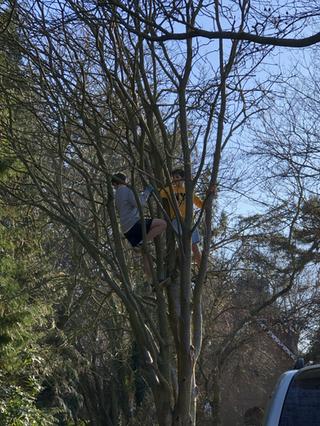 Lots of trees to climb
