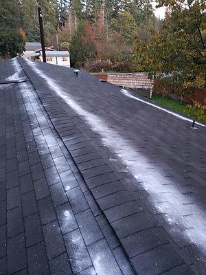 Moss Patrol Roof Treatment