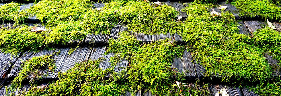 Mossy Roof Cedar Shake