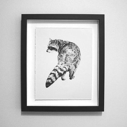 Raccoon Sketch Print