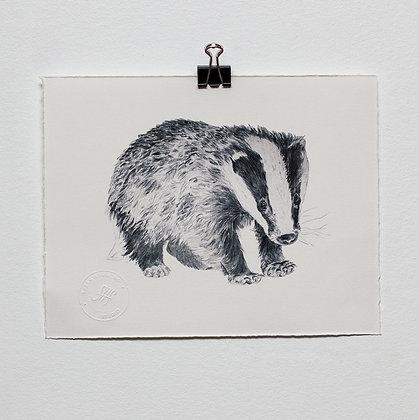Badger Sketch Print