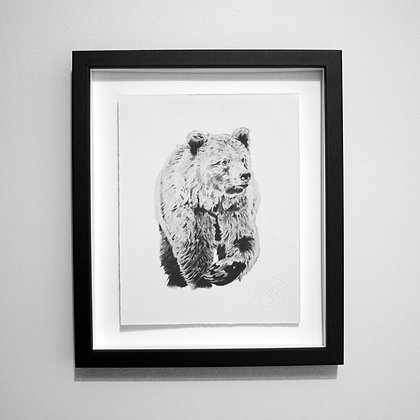 Grizzly Bear Sketch Print