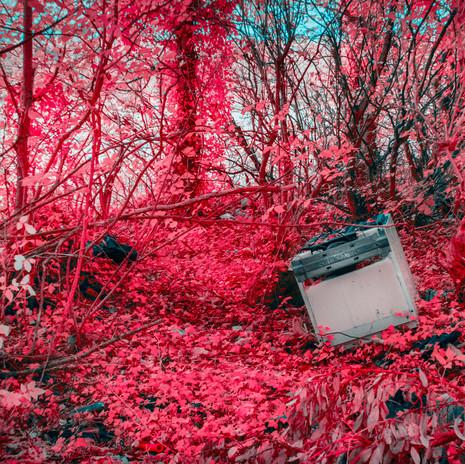 A Surreal Wasteland