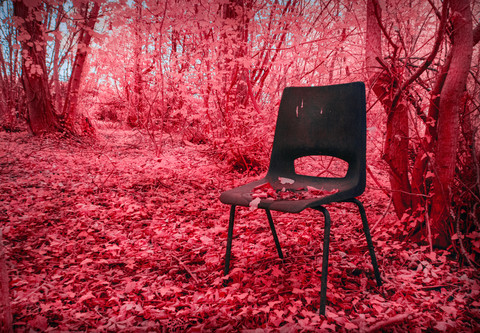 Seated In the Forest